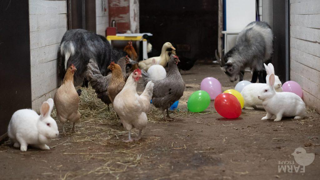 Kanat, puput, ankat ja vuohet tallin käytävällä ilmapallojen seassa.
